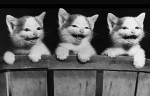 laughing kittens