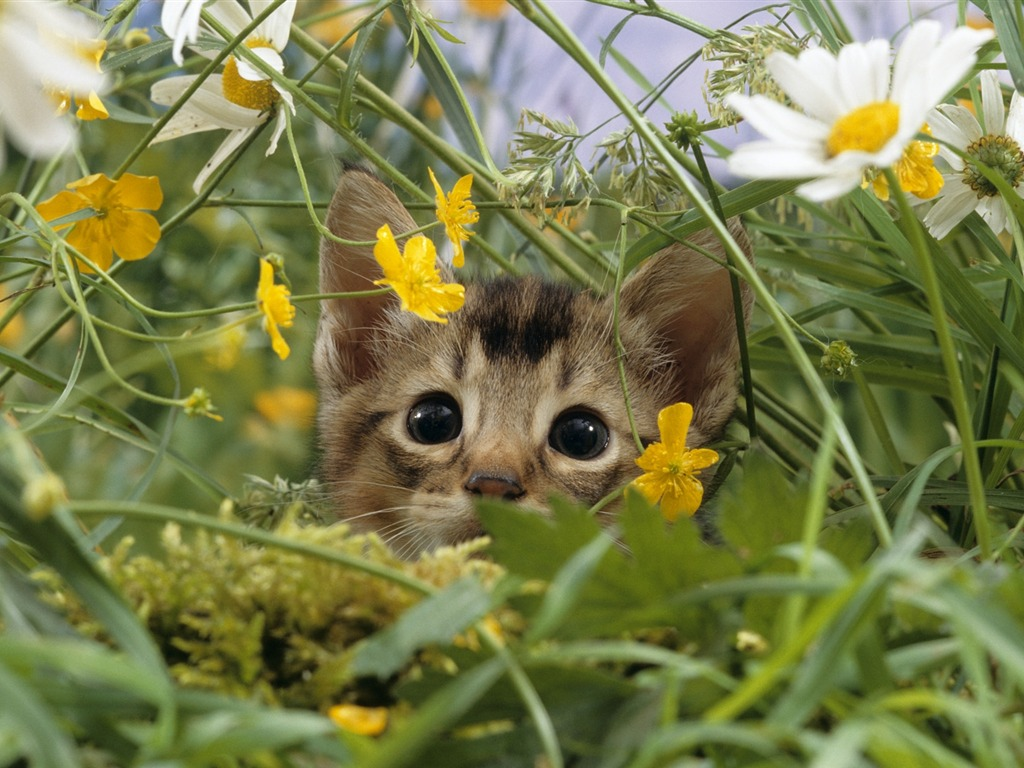 catinflowers